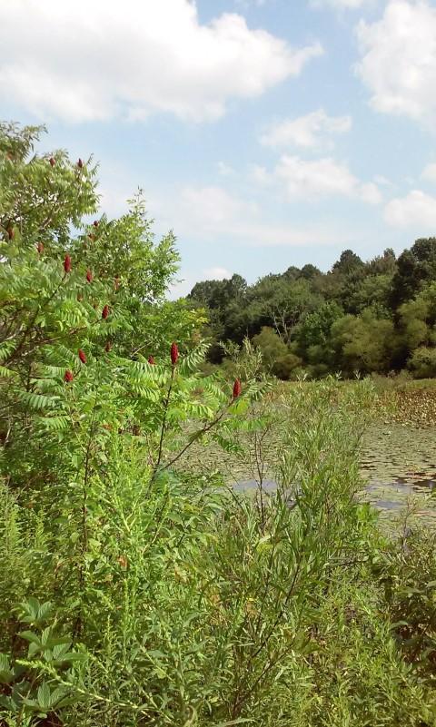 eyring-wetlands-2016