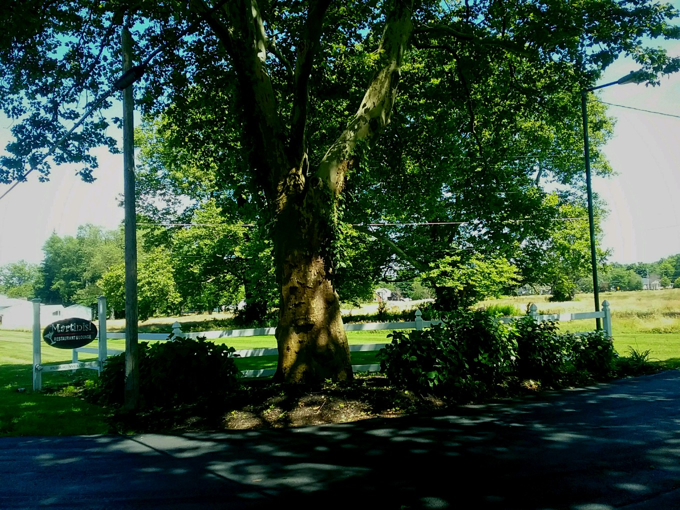 Red Brook Metropark entrance with tree