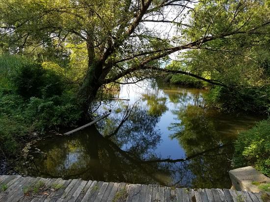 Northern viewfrom the bridge of the Turkey CreekR