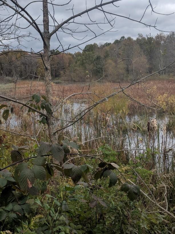 wetlandwanderingsoct3