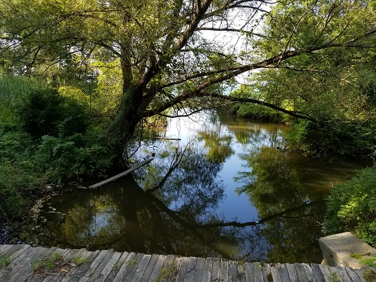 View of water with overhanging trees